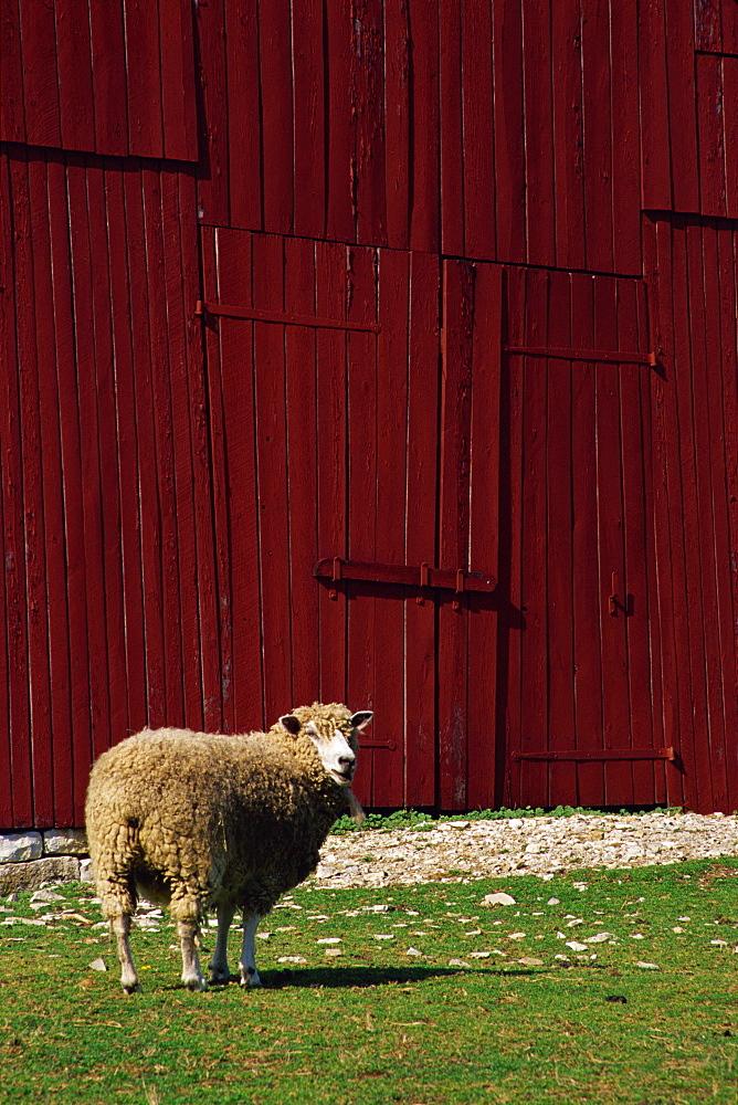 Barn, Shaker village of Pleasant Hill, Lexington area, Kentucky, United States of America, North America