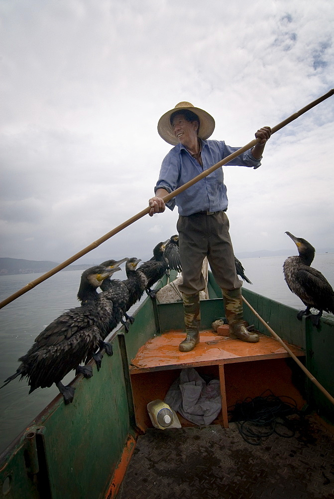 Cormorant fisherman with his birds, Erhai Lake, Dali, Yunnan, China, Asia - 784-17