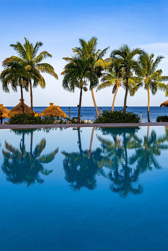 Reflections of palm trees in the swimming pool at Sugar Beach, St. Lucia, Windward Islands, West Indies, Caribbean, Central America - 785-2247