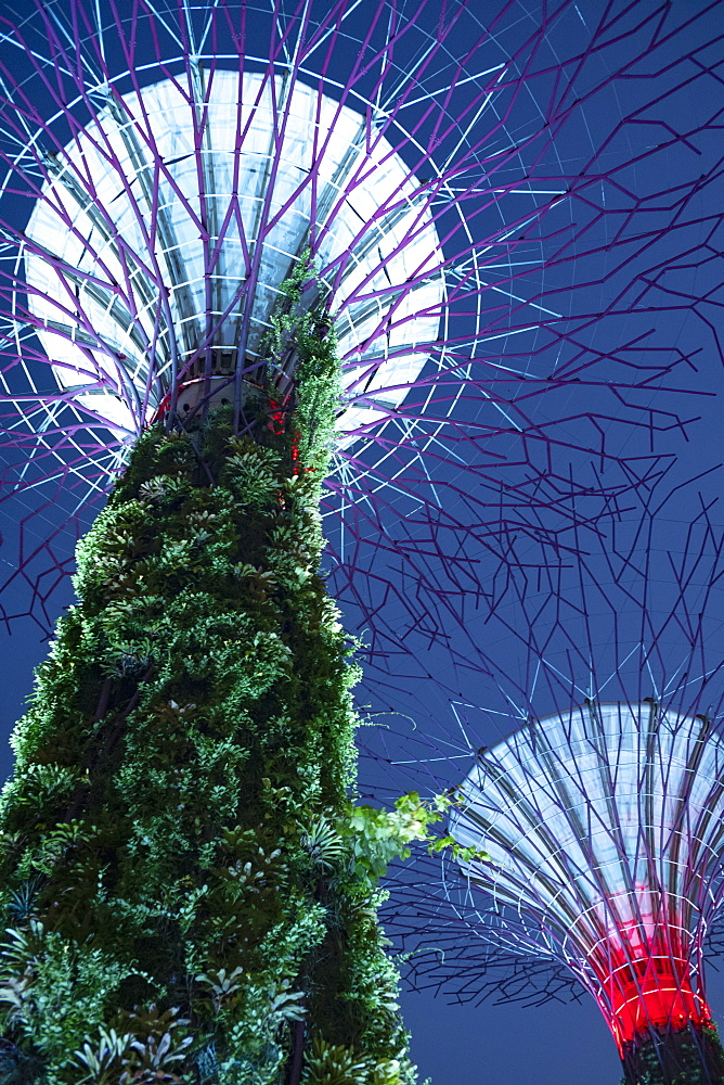 Looking up at the dramatic Supertree Grove, vertical gardens, in the centre of Gardens by the Bay, illuminated at night - 785-2401