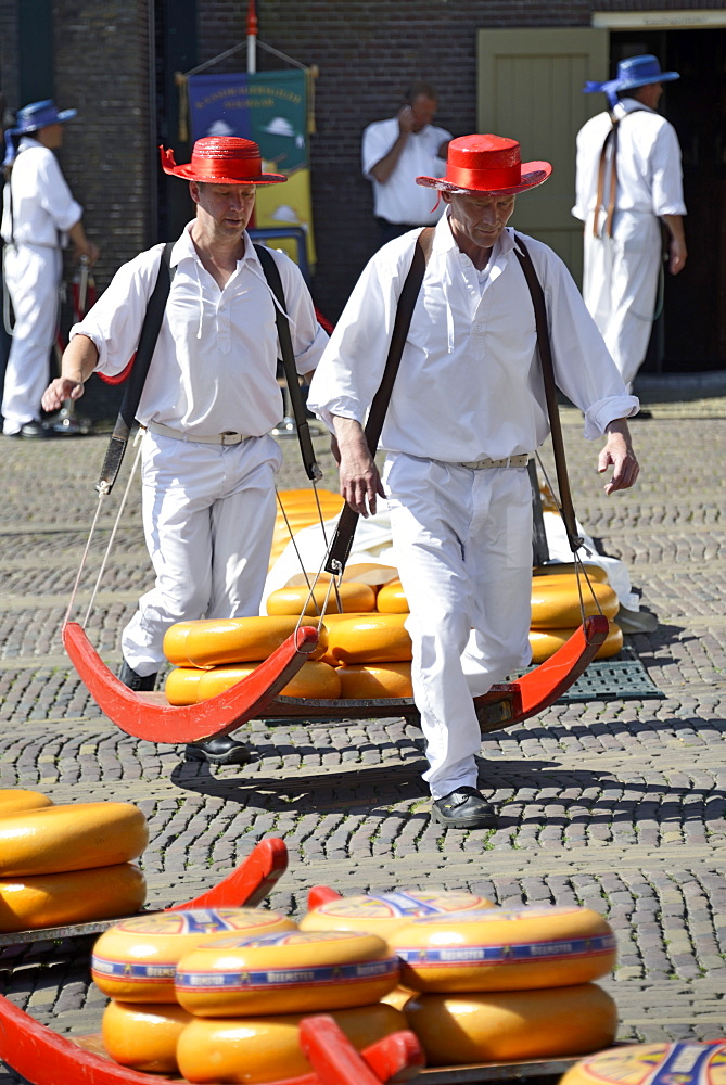 Cheese porters carrying cheese wheels on wooden sledges at the Friday Cheese Market, Waagplein Square, Alkmaar, North Holland, Netherlands, Europe - 792-756