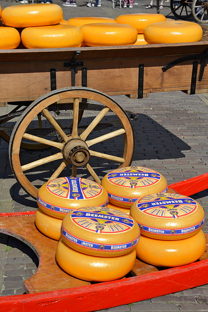 Cheese wheels on a wooden sledge beside a traditional wooden cart, Waagplein Square, Alkmaar, North Holland, Netherlands, Europe