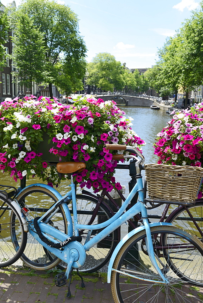 Brightly coloured blue bicycle and flower baskets on a bridge over a canal, Utrechtsestraat, Amsterdam, North Holland, Netherlands, Europe