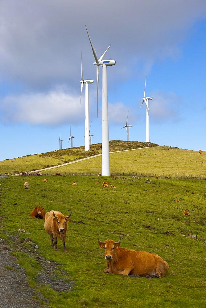 Wind farm and cows, Ortiguera area, A Coruna, Galicia, Spain, Europe - 793-1028