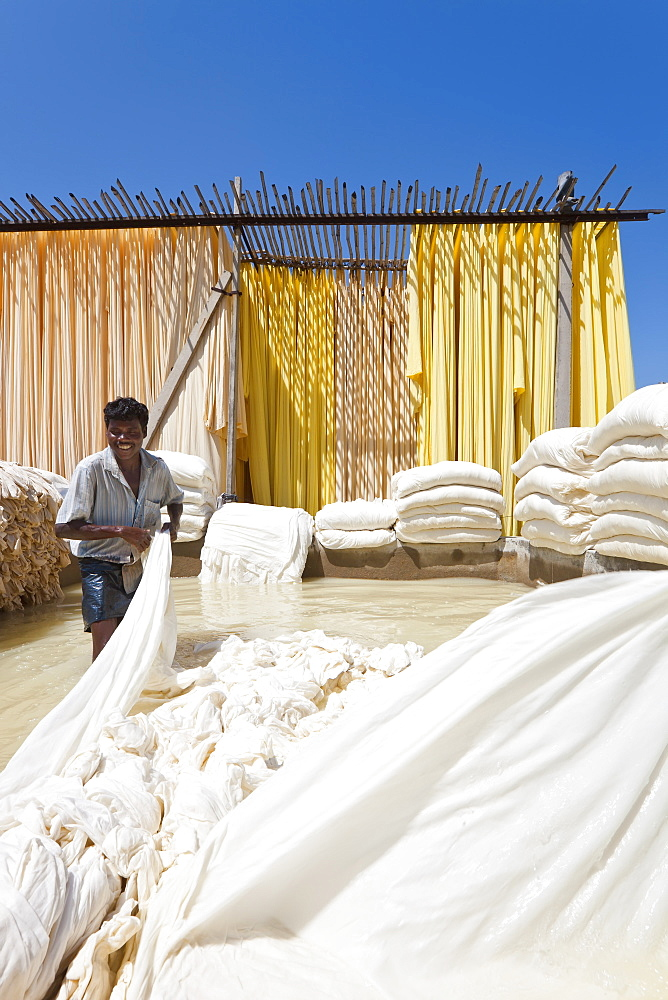 Washing fabric in a bleaching pool, Sari garment factory, Rajasthan, India, Asia