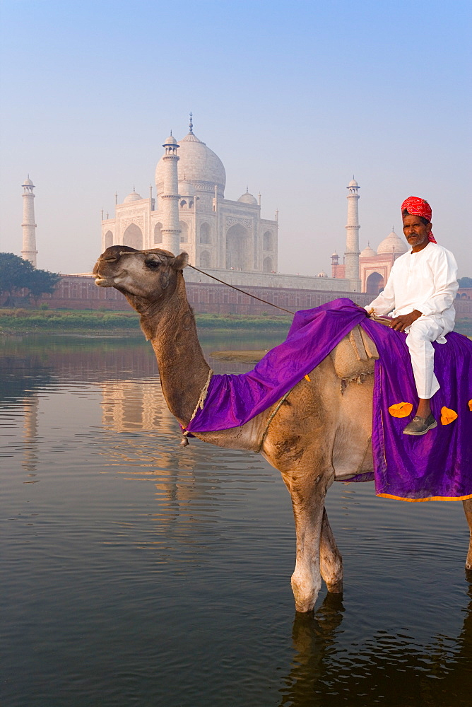 Man on camel in the Yamuna River in front of the Taj Mahal, UNESCO World Heritage Site, Agra, Uttar Pradesh, India, Asia
