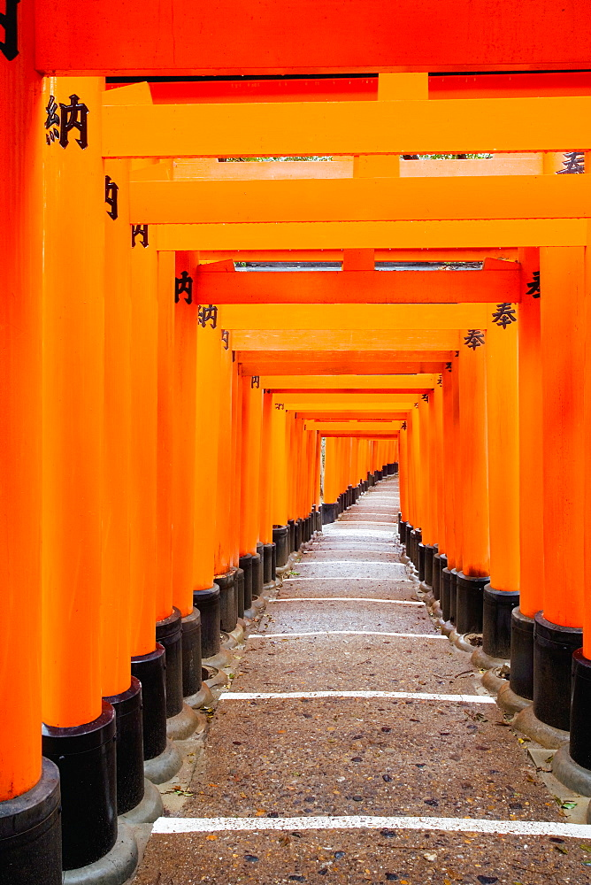 Red Torii gates, Fushimi Inari Taisha Shrine, Kyoto, Kansai Region, Honshu, Japan, Asia
