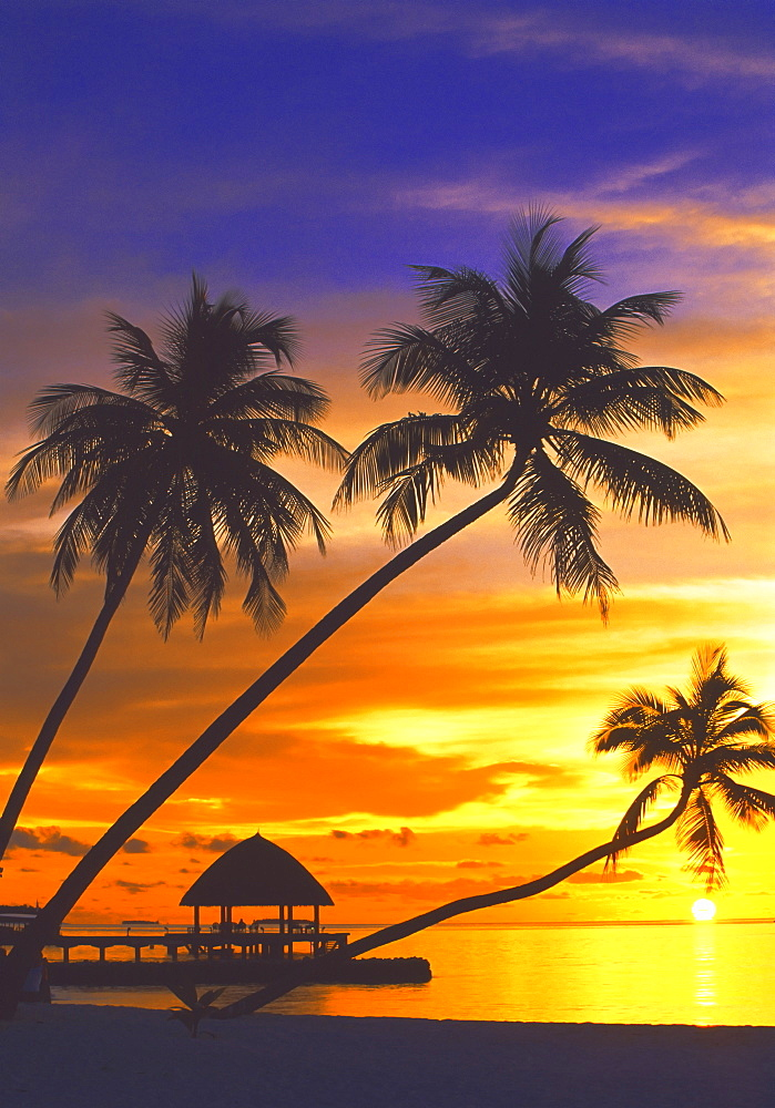 Palm trees and ocean at sunset, Maldives, Indian Ocean, Asia - 795-99