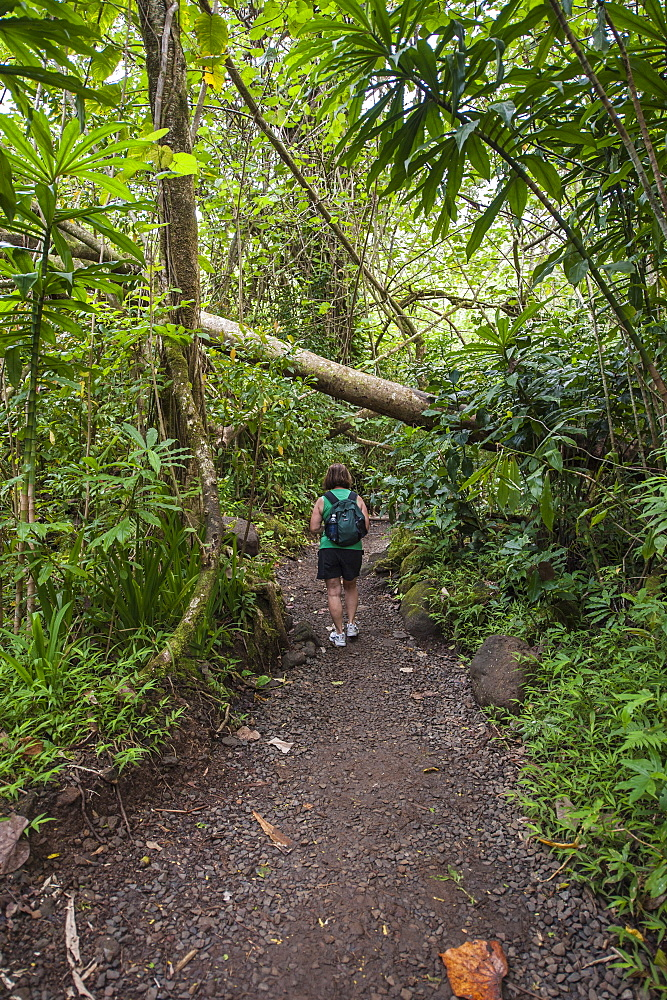 Hiking Manoa Falls Trail, Honolulu, Oahu, Hawaii, United States of America, Pacific