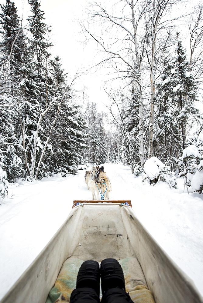 Dogsledding, Yellowknife, Northwest Territories, Canada, North America