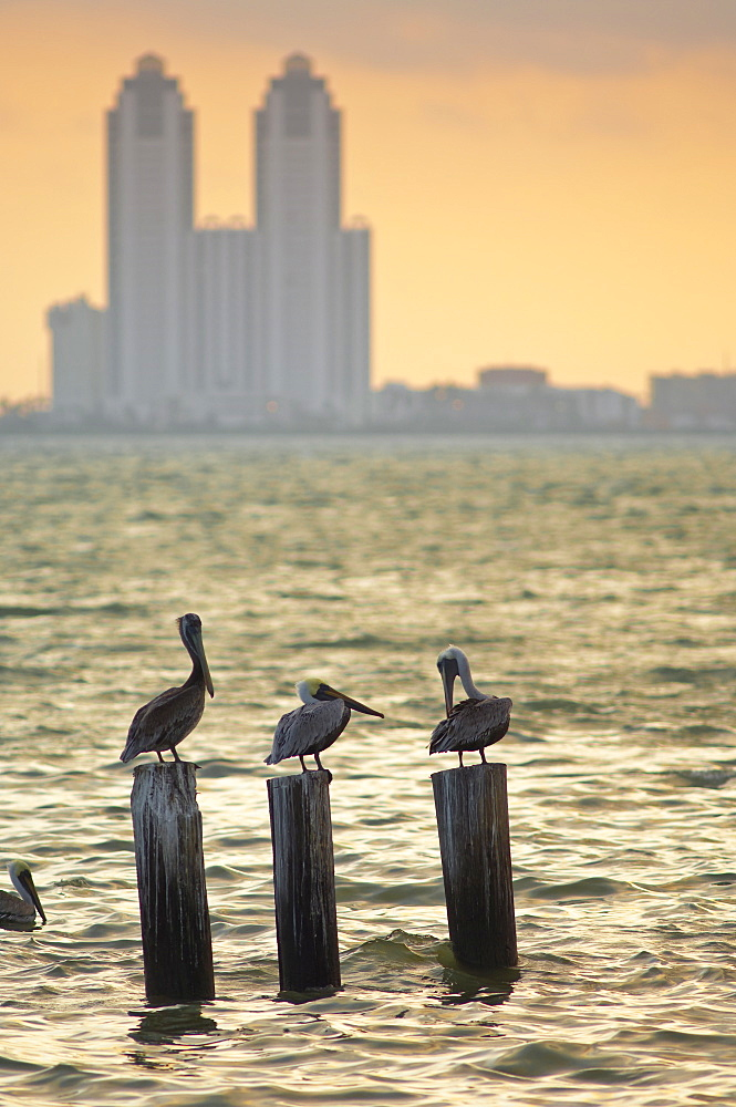 San Padre Island, Texas, United States of America, North America