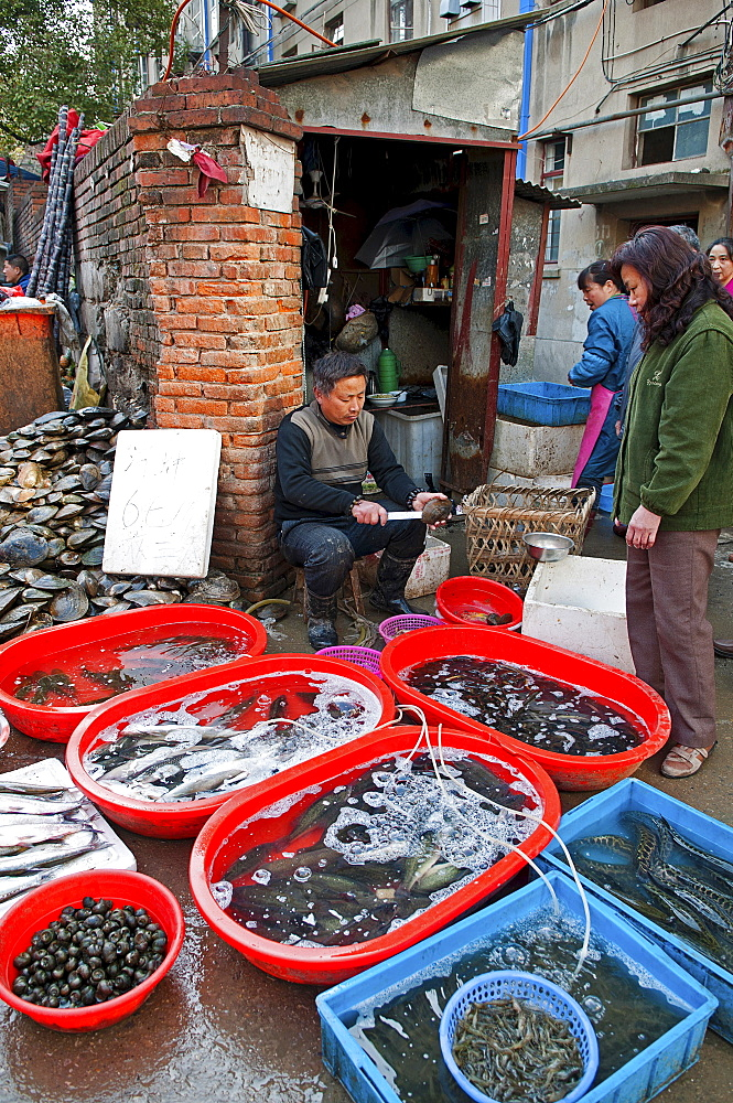 China, Jiangsu, Nanjing, Fishmonger opening and cleaning shellfish with a knife for a customer at a street market near Xuanwu Lake Red and blue plastic tubs with live fish and shellfish with water being oxygenated via plastic tubes.