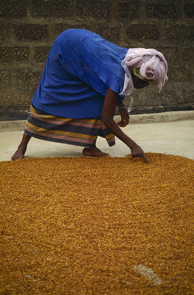 SIERRA LEONE  Agriculture Woman spreading grain on the ground to dry