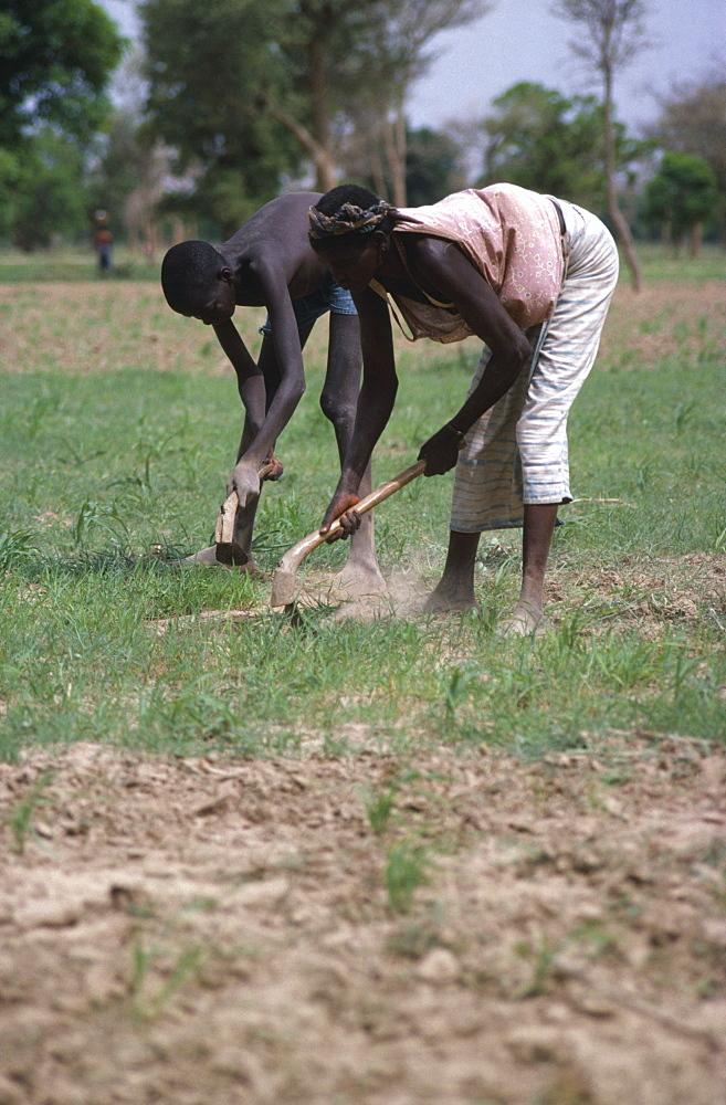 BURKINA FASO  Kiembara Man and woman hand tilling soil in field.