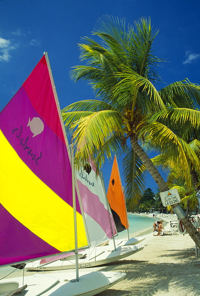 WEST INDIES Jamaica Negril Sunfish dingies with sails up on coconut palm tree fringed beach