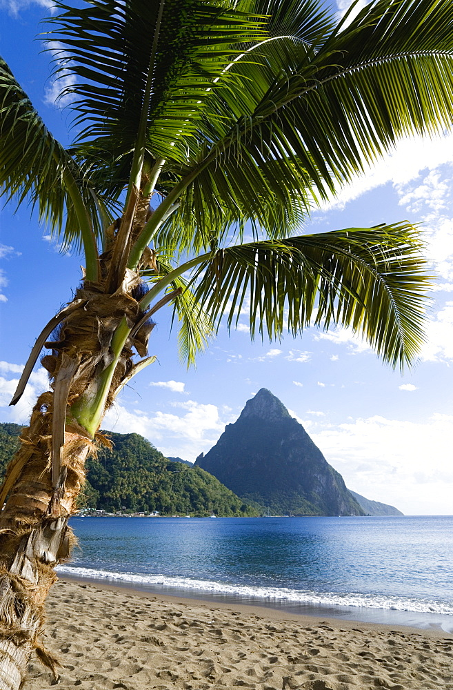 Soufriere Beach lined with coconut palm trees with the town and the volcanic plug mountain of Petit Piton beyond, Soufriere, St Lucia - 797-5543