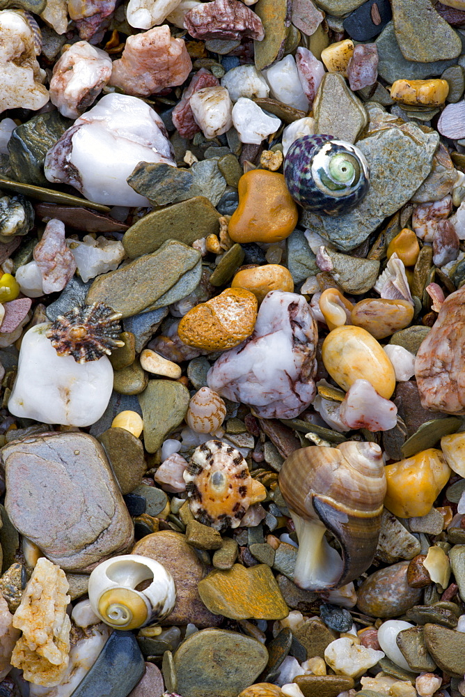 Sea shells and stones on the seashore at Bantham in South Devon, England, United Kingdom, Europe