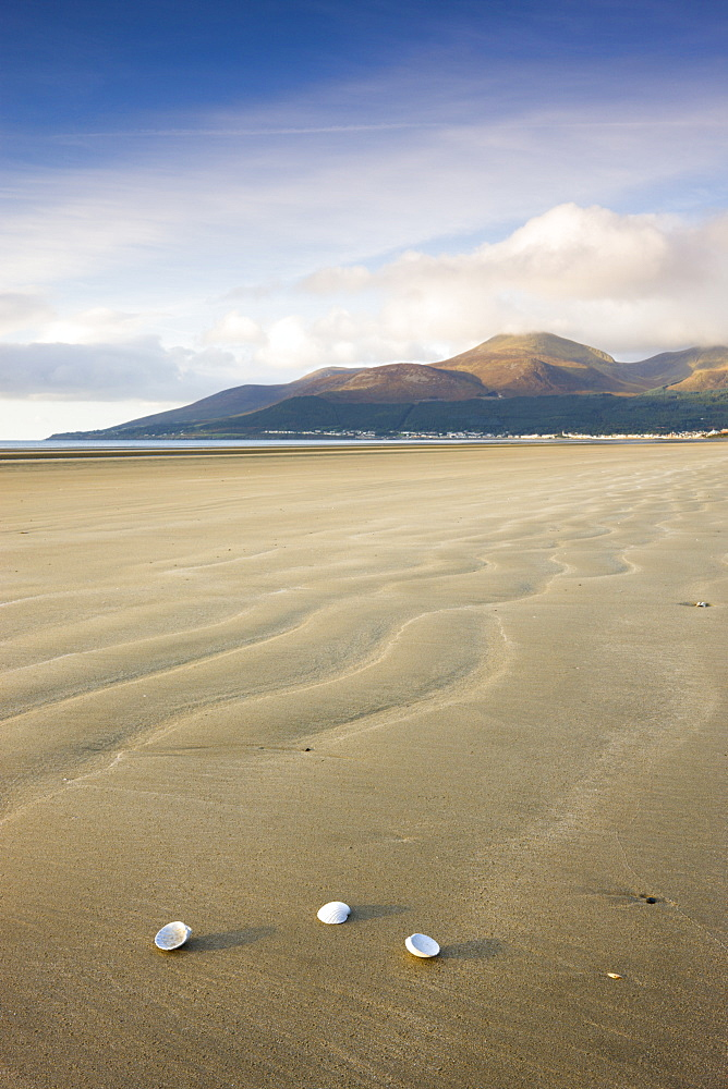 Shells on Dundrum Bay, looking towards the Mountains of Mourne, County Down, Northern Ireland, United Kingdom, Europe