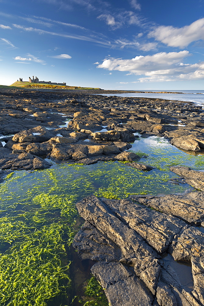 Wide open spaces at Dunstanburgh Castle, Northumberland, England, United Kingdom, Europe