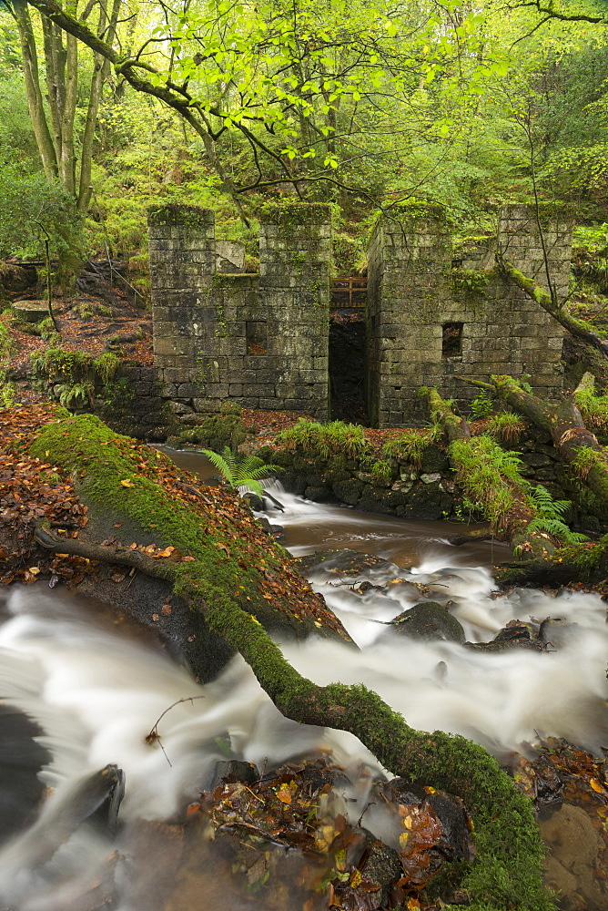 Abandoned 19th century gunpowder works at Kennall Vale, now a wooded nature reserve, Ponsanooth, Cornwall, England, United Kingdom, Europe