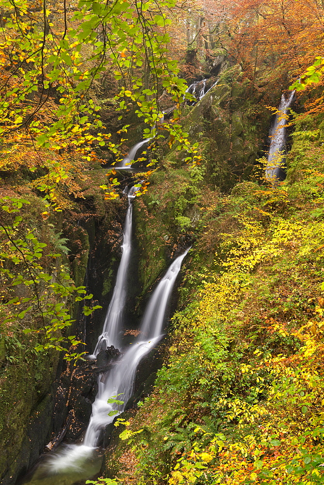 Stock Ghyll Force waterfall cascading through autumnal woodland, Lake District National Park, Cumbria, England, United Kingdom, Europe - 799-3477