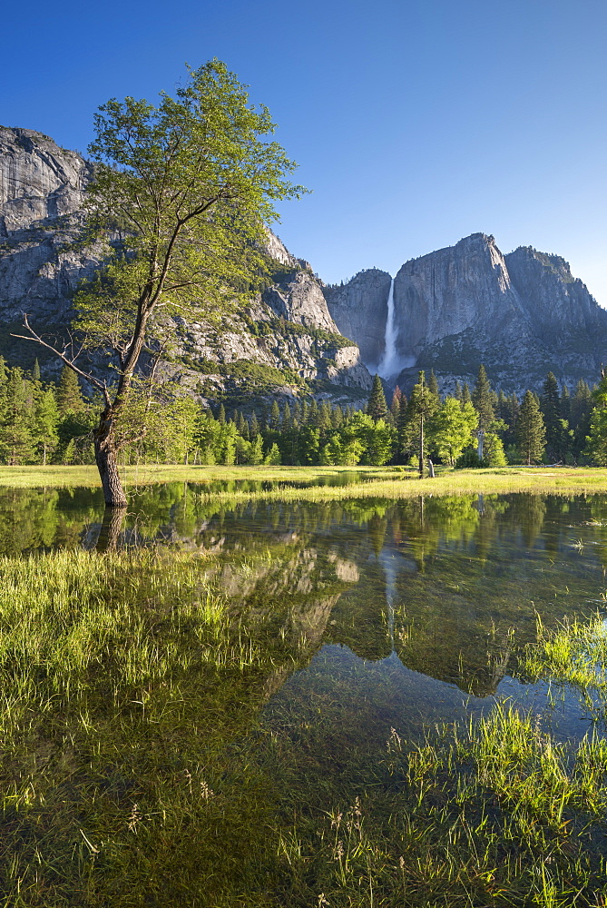 Flooded meadow in Yosemite Valley, Yosemite National Park, UNESCO World Heritage Site, California, United States of America, North America