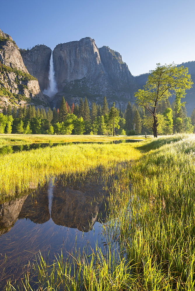 Yosemite Falls, reflected in a meadow flood pool, Yosemite Valley, Yosemite National Park, UNESCO World Heritage Site, California, United States of America, North America