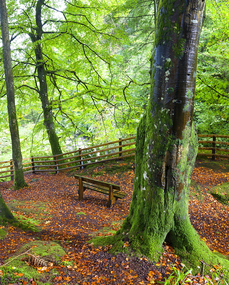 Secluded bench in Glenariff Forest Park, County Antrim, Ulster, Northern Ireland, United Kingdom, Europe