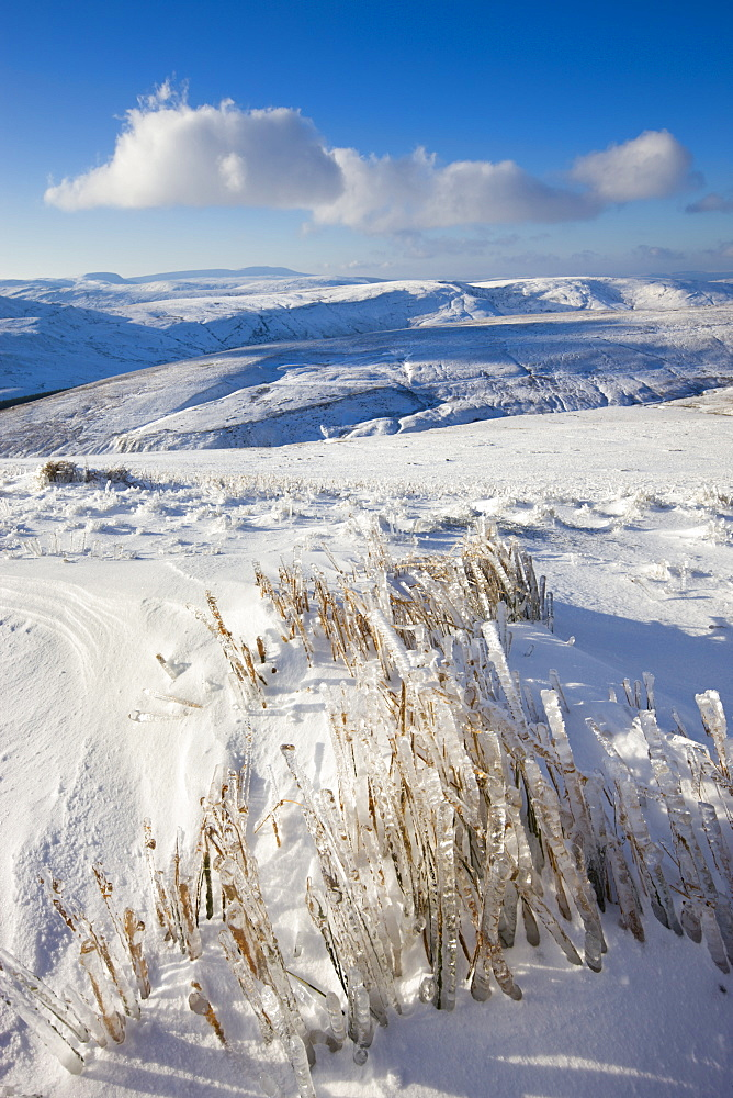 Frozen grass on the snow covered slopes of Pen y Fan mountain in the Brecon Beacons National Park, Powys, Wales, United Kingdom, Europe