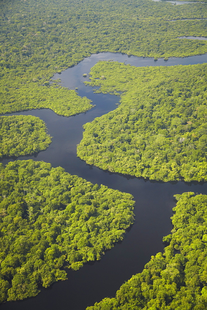 Aerial view of Amazon rainforest and tributary of the Rio Negro, Manaus, Amazonas, Brazil, South America  - 800-1087