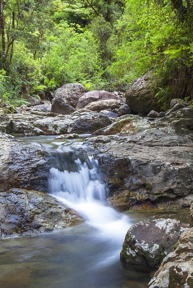 Stream along Waiomu Kauri Grove trail, Thames, Coromandel Peninsula, Waikato, North Island, New Zealand, Pacific