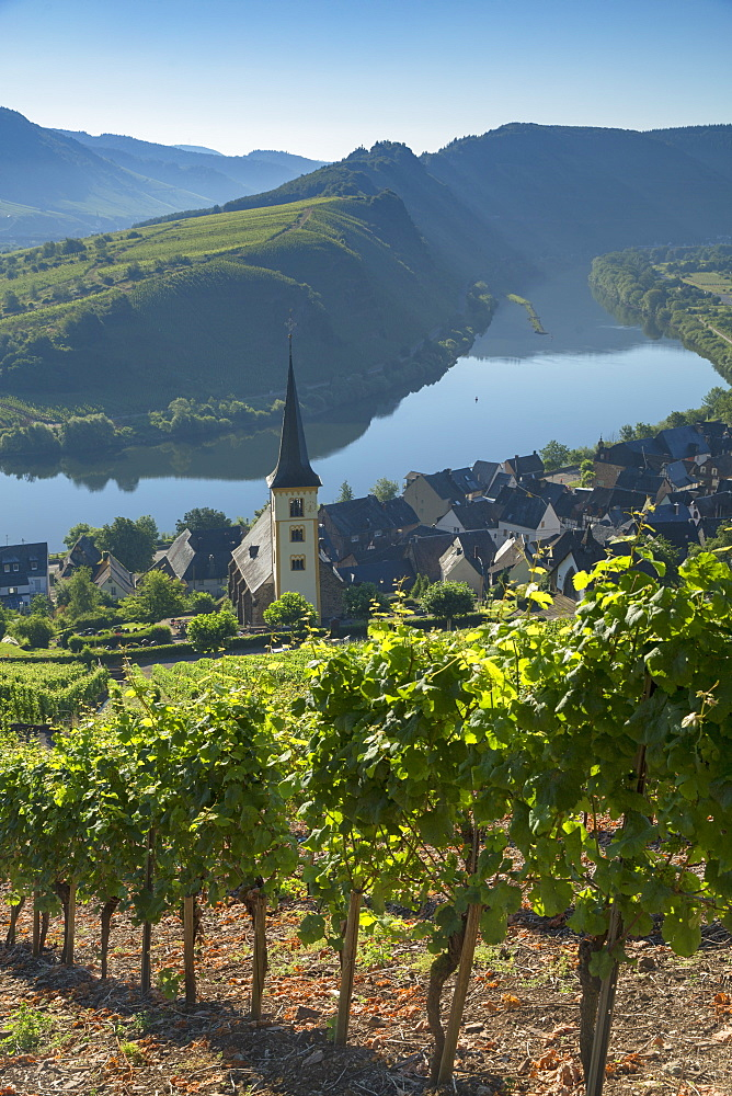 View of River Moselle and St. Lawrence's Church, Bremm, Rhineland-Palatinate, Germany, Europe