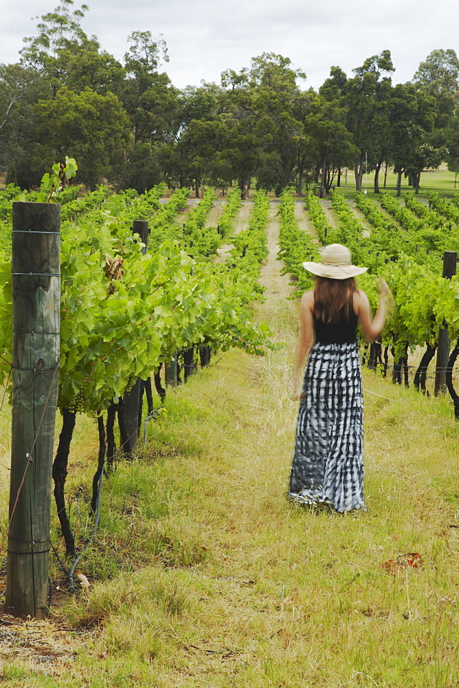 Woman walking through vines at Sandalford Winery, Swan Valley, Perth, Western Australia, Australia, Pacific