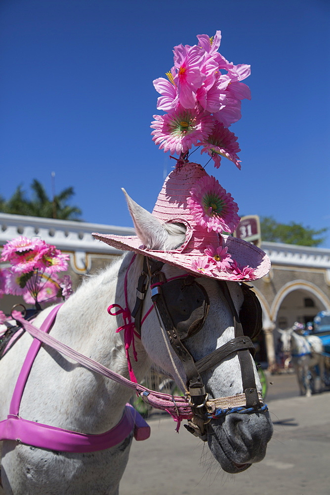 Horse with hat, Izamal, Yucatan, Mexico, North America
