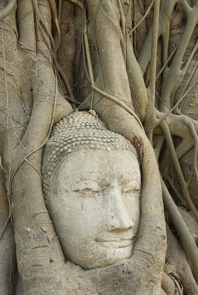 Buddha head, Wat Mahathat, Ayutthaya, UNESCO World Heritage Site, Thailand, Southeast Asia, Asia