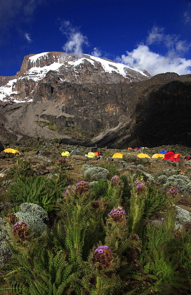 Climbers camping at the Barranco campsite underneath the snowy Uhuru Peak of Mount Kilimanjaro, Tanzania, East Africa, Africa