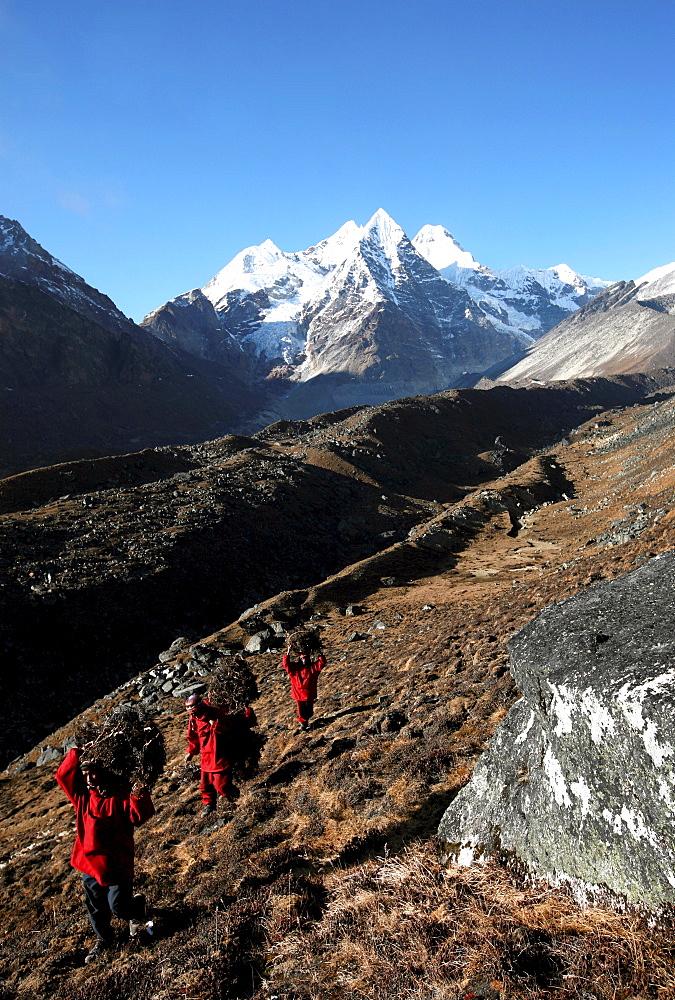 Three Buddhist monks carry firewood high above the mountain village of Khare, Khumbu Region, Nepal, Himalayas, Asia