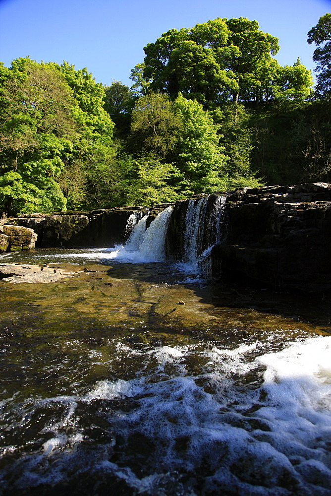 Aysgarth Falls, North Yorkshire, Yorkshire, England, United Kingdom, Europe