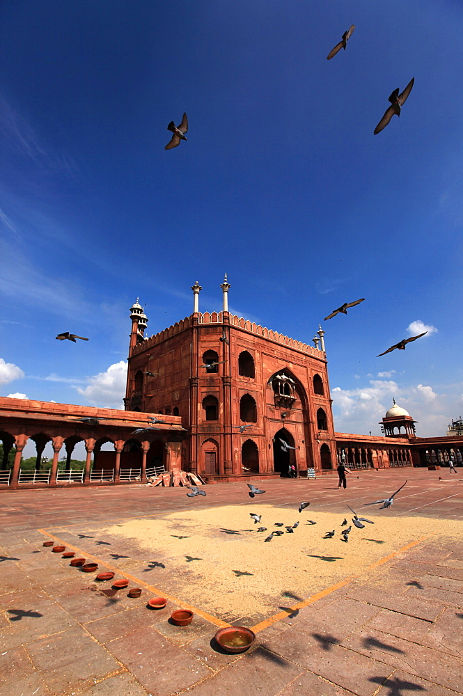 Pigeons feed on grain scattered on the paving stones in the courtyard of Jama Masjid (Friday Mosque), Old Delhi, Delhi, India, Asia