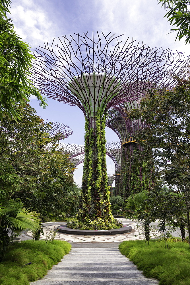 The Supertrees in the Garden By The Bay in Singapore, Southeast Asia, Asia - 803-224