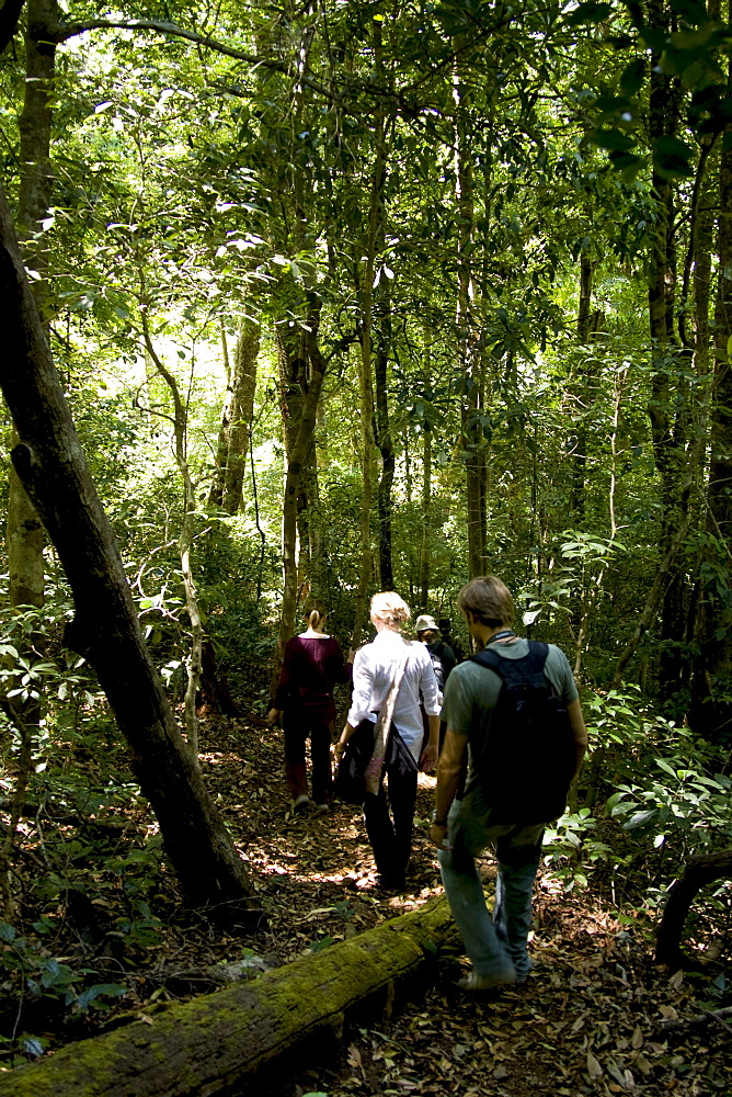 Trekking through the forest, Thekkady, Kerala, India, Asia - 804-333