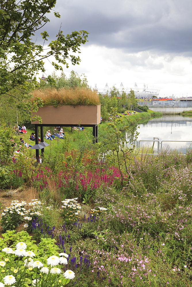 Wild flowers in the Olympic Park, Stratford City, London, England, United Kingdom, Europe