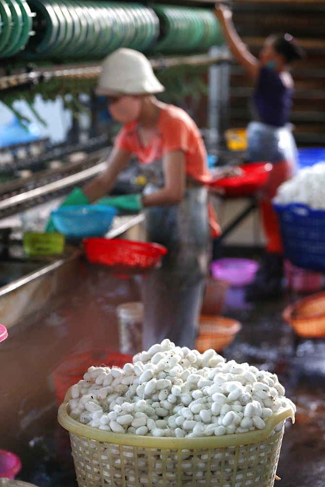 Silkworm cocoons in traditional silk factory, Dalat, Vietnam, Indochina, Southeast Asia, Asia - 809-7302