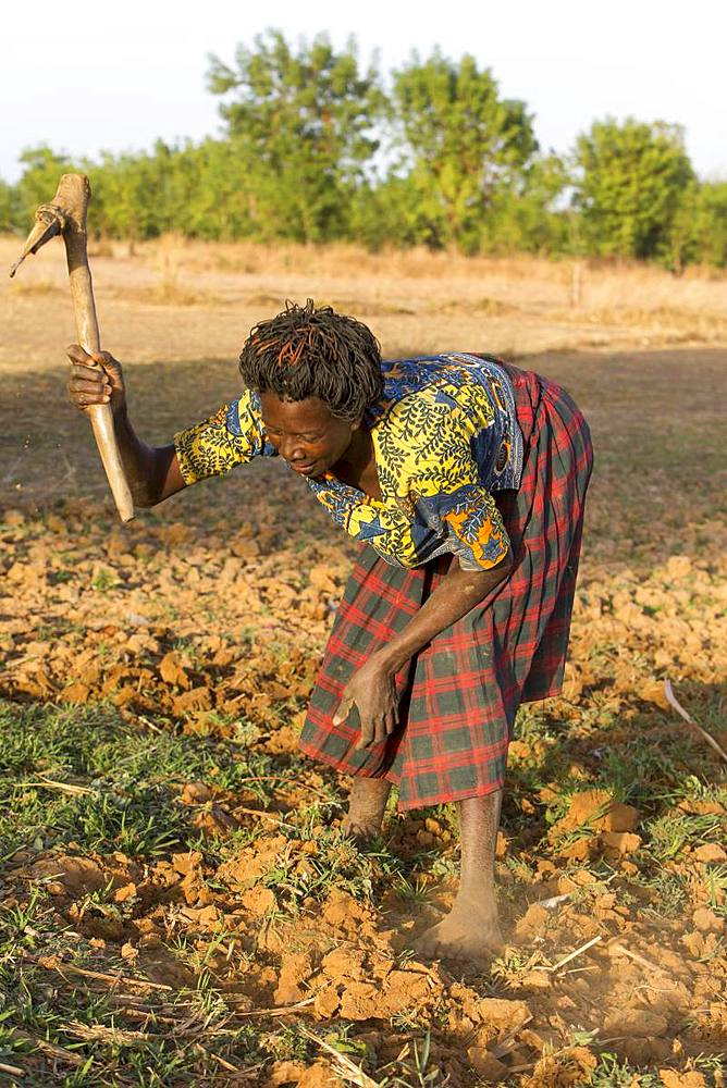 Women's cooperative member digging a field in Karsome, Togo, West Africa, Africa