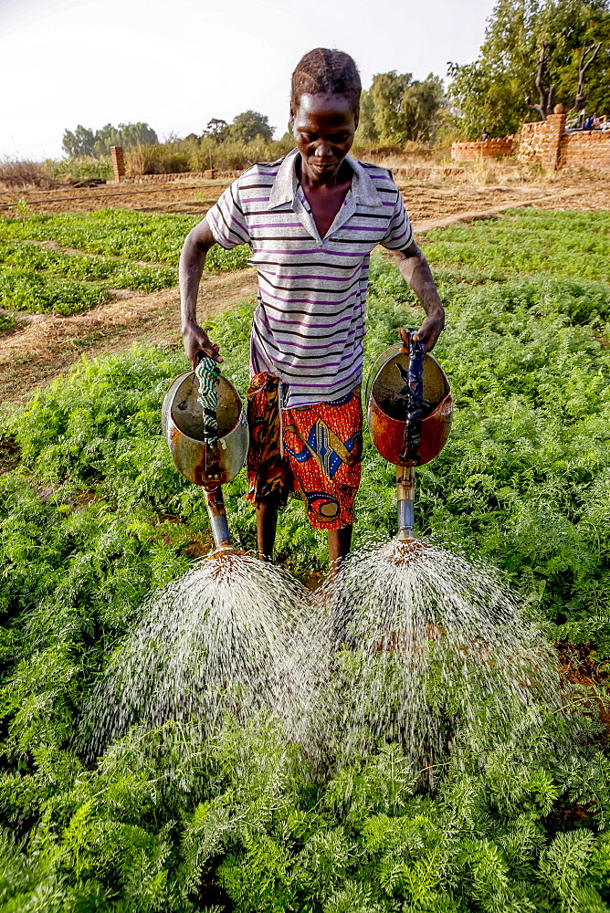 Woman watering a vegetable garden in Loumbila, Burkina Faso, West Africa, Africa
