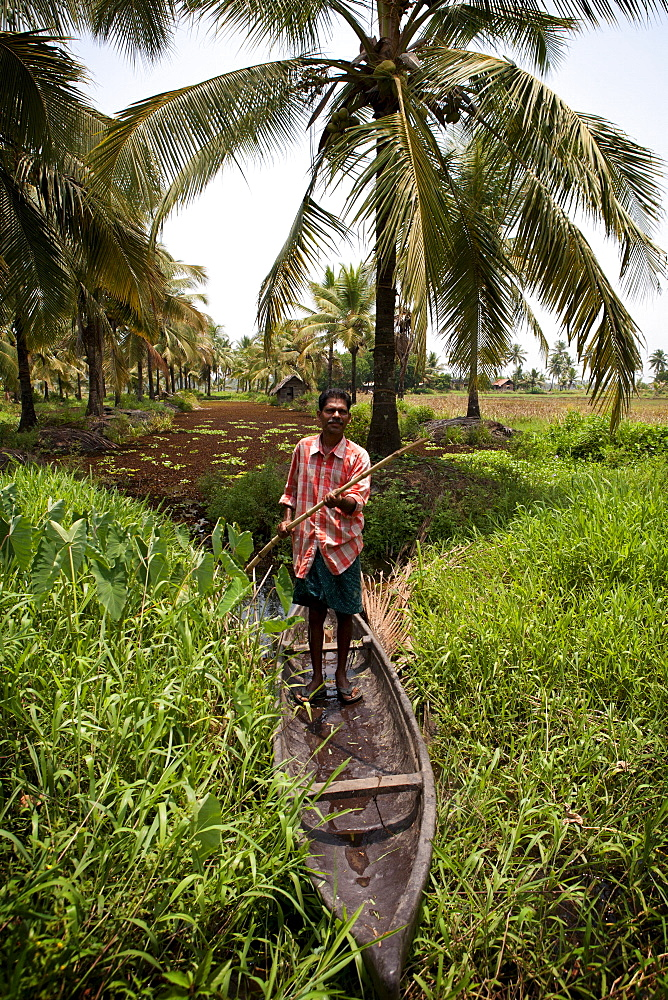 Local man collecting coconut sap for toddy production standing in canoe, Kerala, India, Asia - 812-226