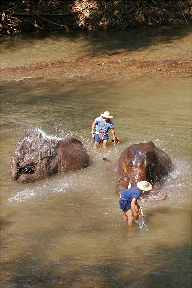 Demonstration at the Elephant training center, close to Chiang Mai, Thailand, Southeast Asia, Asia