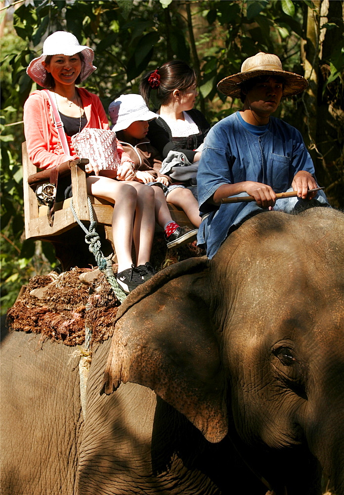 Riding demonstration at the Elephant training center, close to Chiang Mai, Thailand, Southeast Asia, Asia