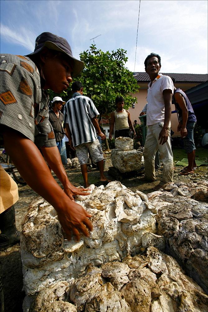 Weighing latex for rubber, Lake Toba area, Sumatra, Indonesia, Southeast Asia, Asia