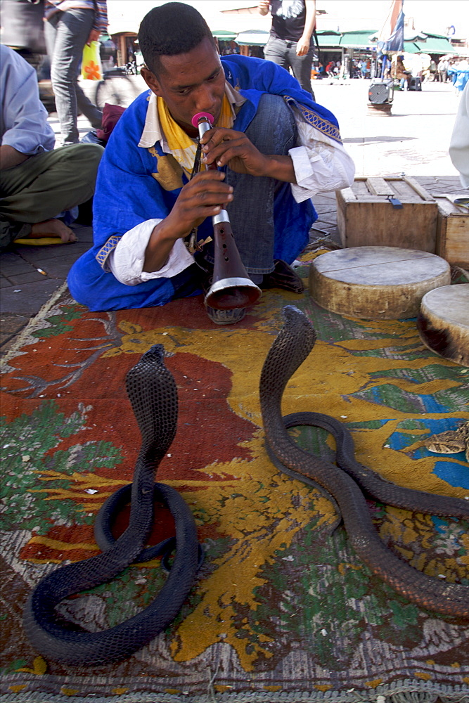 Snake charmer on Djemaa El Fna square, Marrakech, Morocco, North Africa, Africa